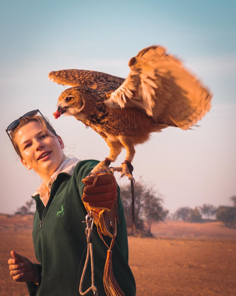 Al Maha, a Luxury Collection Desert Resort & Spa, Dubai falcon