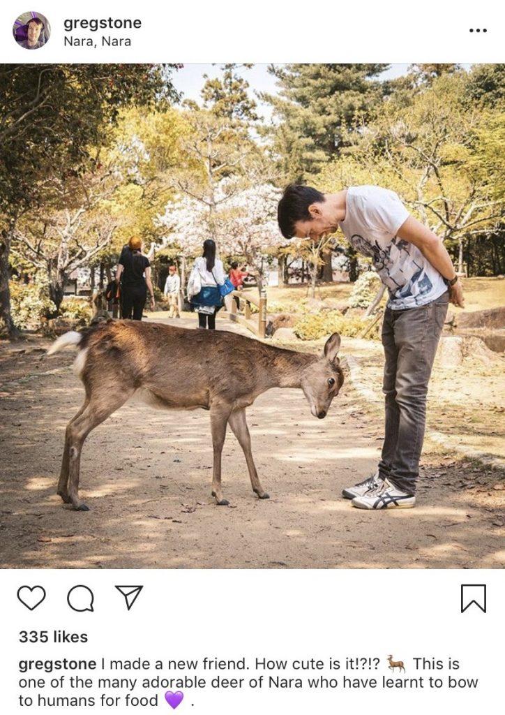 Greg Store in Nara with deer