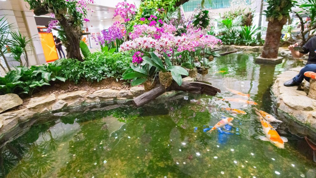 Changi Airport - Terminal 2 Koi pond